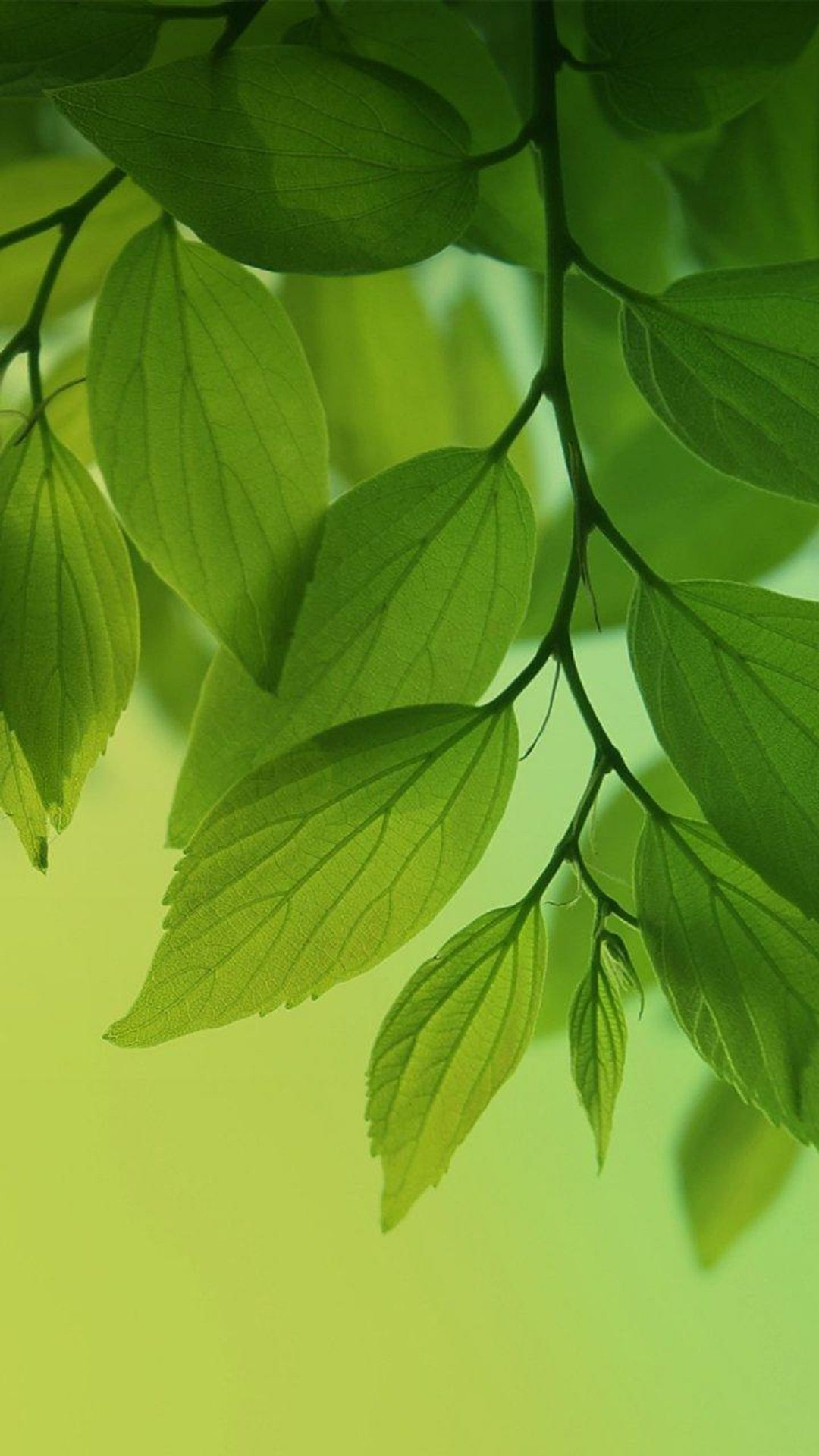 Green Leaves Wallpaper 66 Images