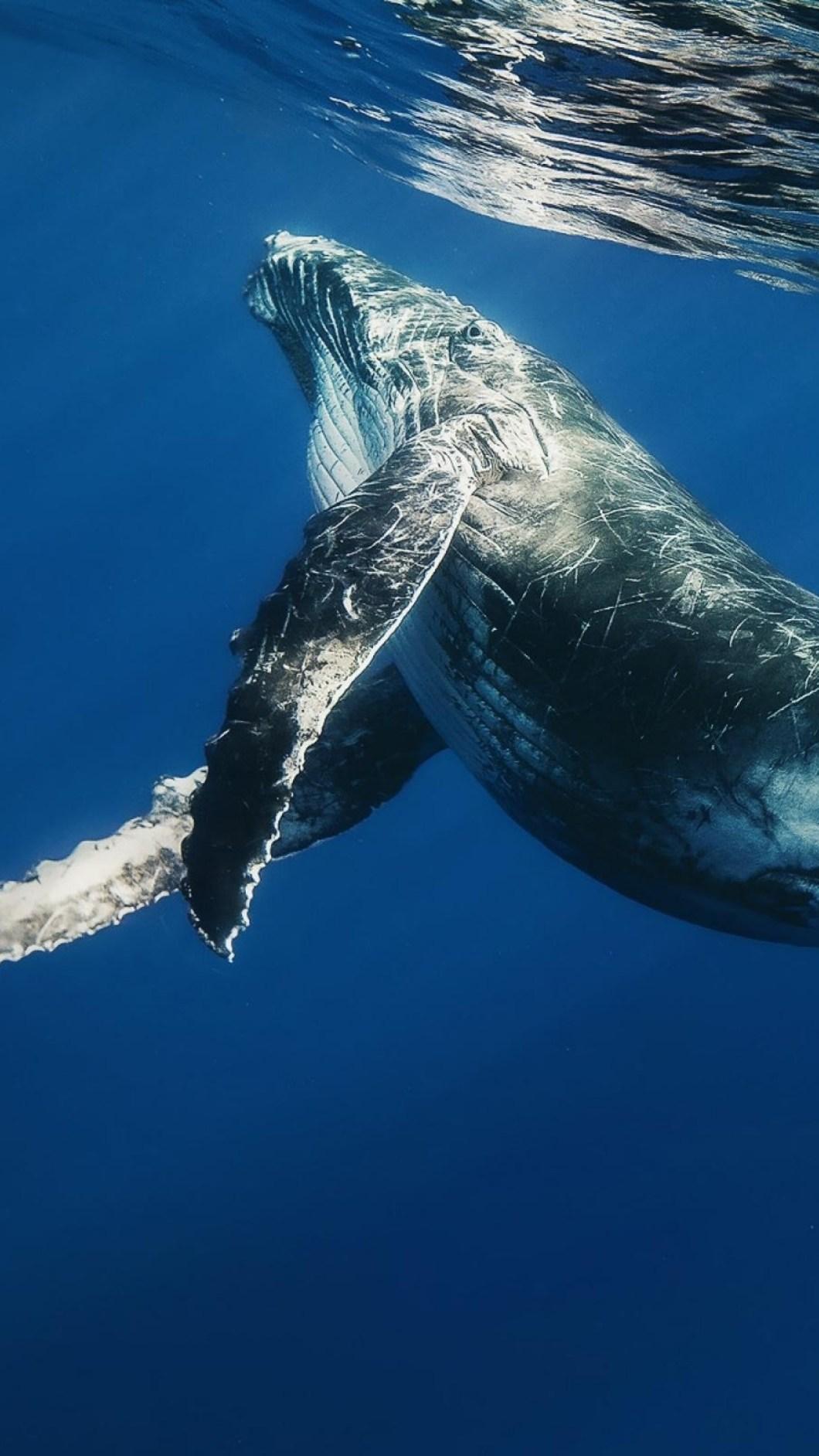 Samsung Galaxy S8 Blue Whale Hd Wallpaper