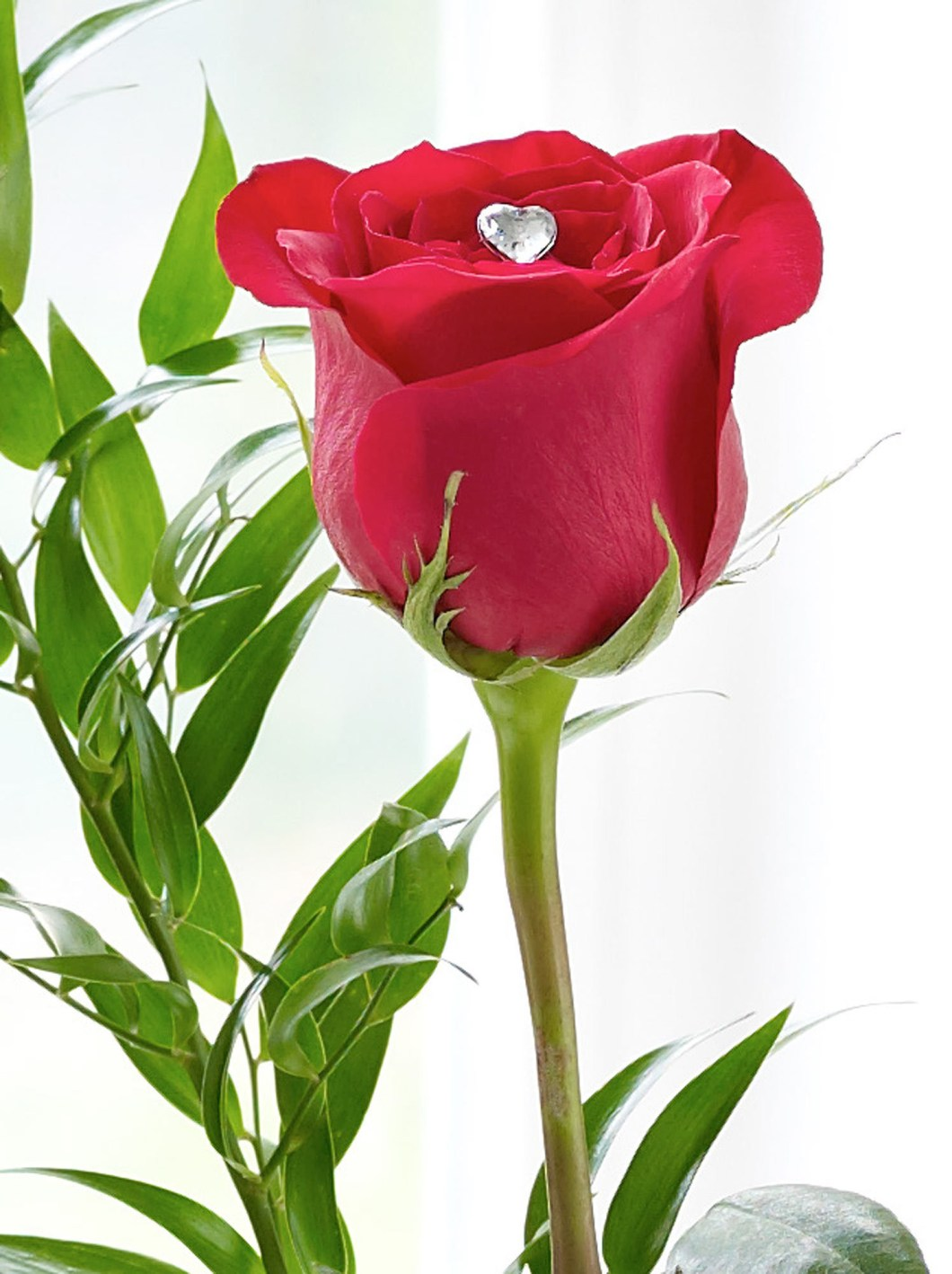 Single Red Rose Flower Pictures Kayaflower Co