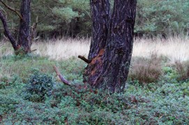 bosbessen-rood-small