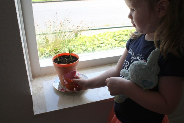 my-fairy-garden-flowerpot-2