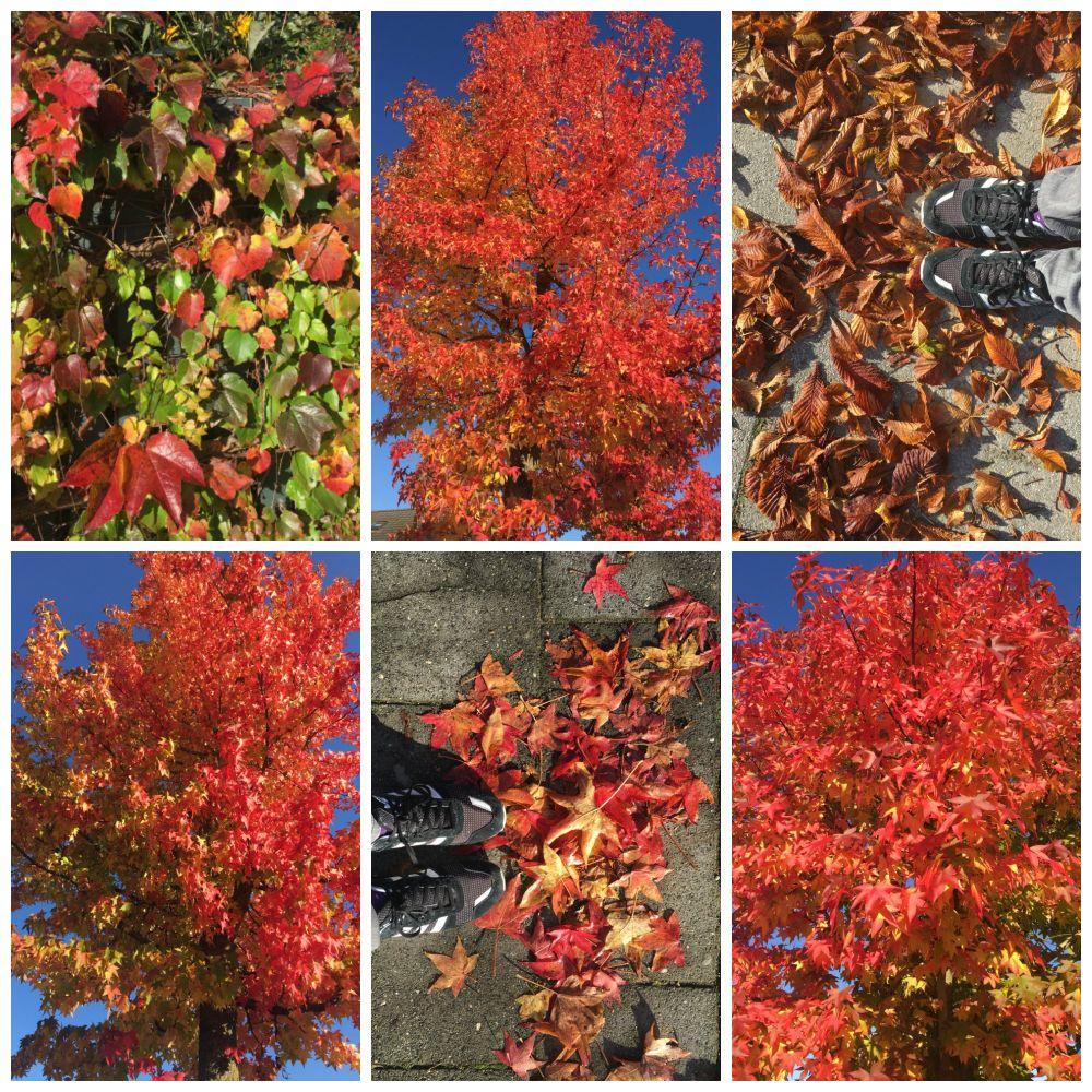 herfst-week-42