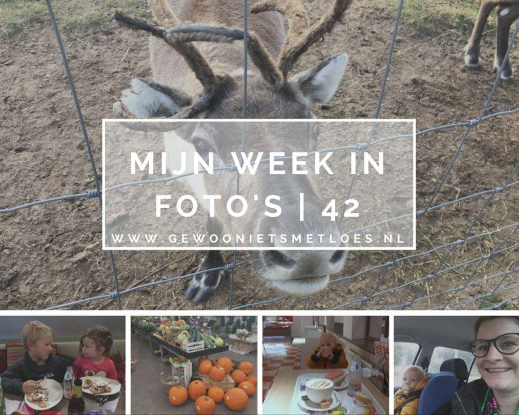 week in foto's 42