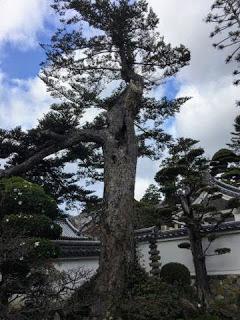 Japon Kimidera Temple 10