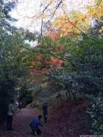 Atatürk Arboretumu