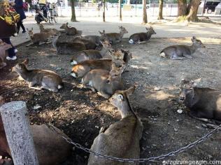 Nara/Japan