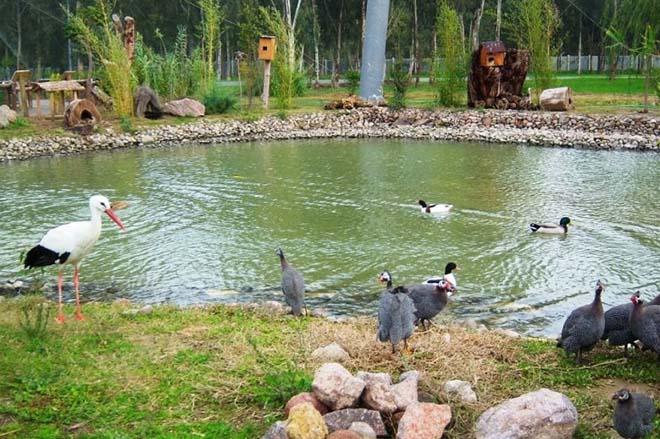 İzmir-Gezilecek-Yerler-İzmir-Doğal-Yaşam-Parkı