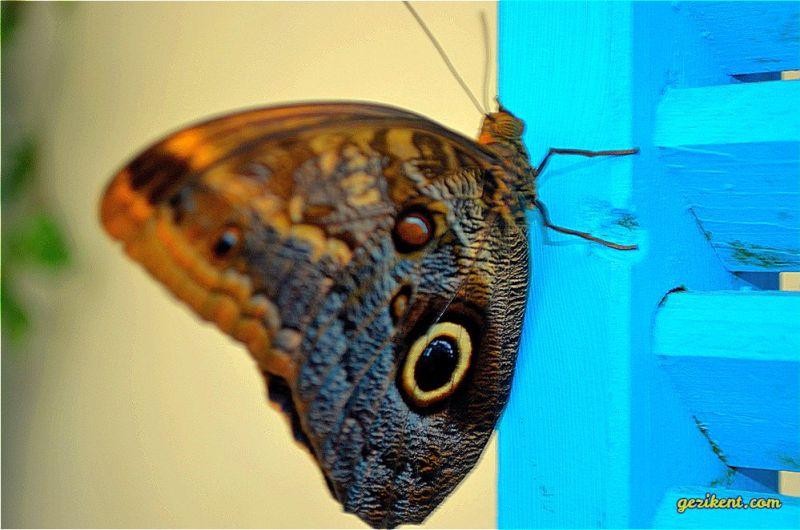 kelebekler vadisi nerede
