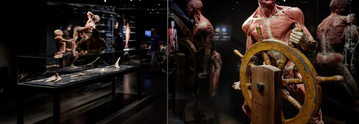 Body Worlds Anatomi Müzesi