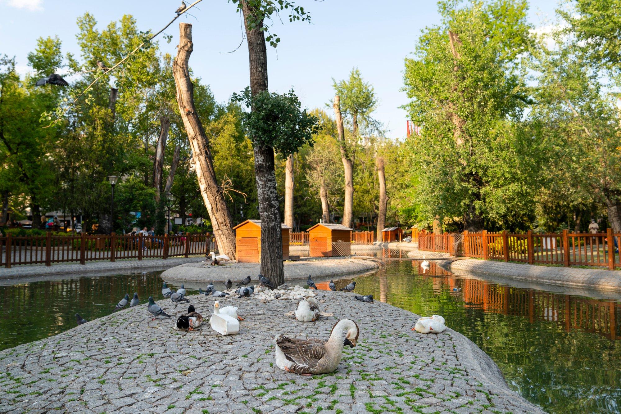 Kuğulu Park - Ankara - Gezimingo