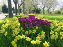 Bursa botanik parkı laleler