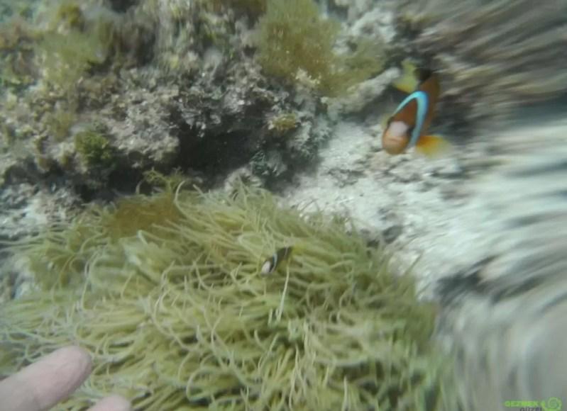 Palyaço Balığı - El Nido Tekne Turları
