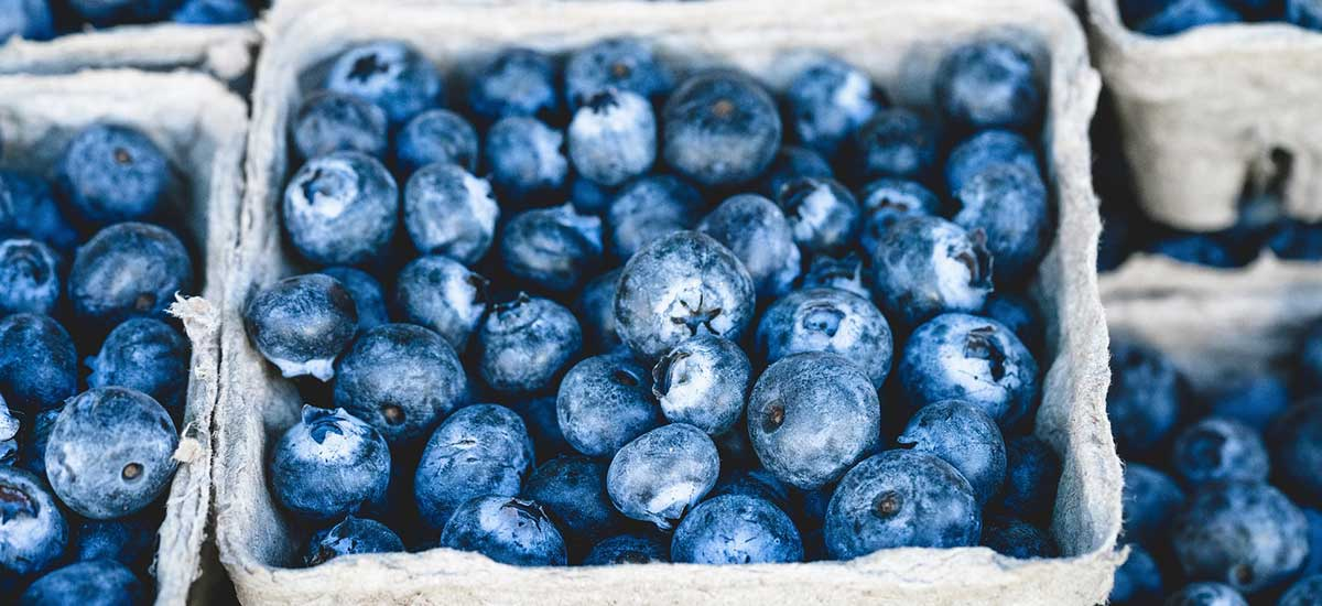 Gezonde Dutchies | blueberries