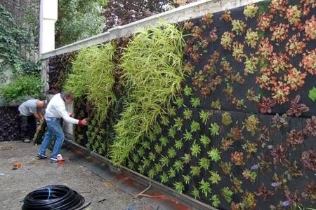groene muur