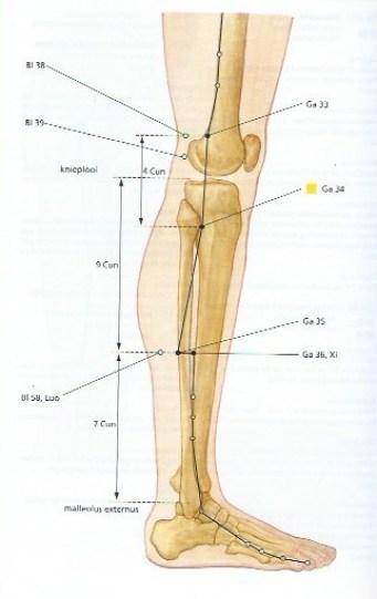 galblaas34-gezondheid-hoofdpijn-schouderpijn-misselijkheid-acupressuur