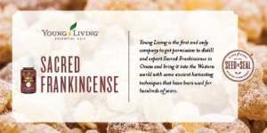 Young Living's Sacred Frankincense