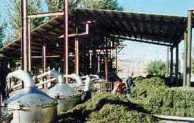 distill-oil