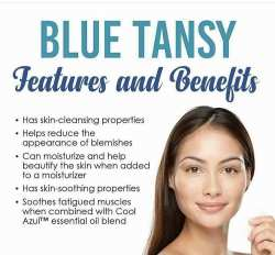 Blue Tansy Essential Oil Benefits