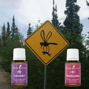mosquito-repels