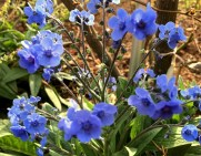 Delicate Cornflower blue