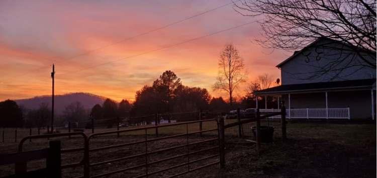 Golden Fleece Farm marketing for equestrians