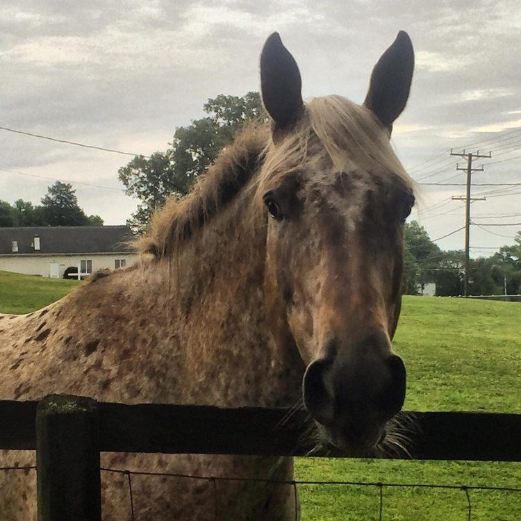 equestrian marketing