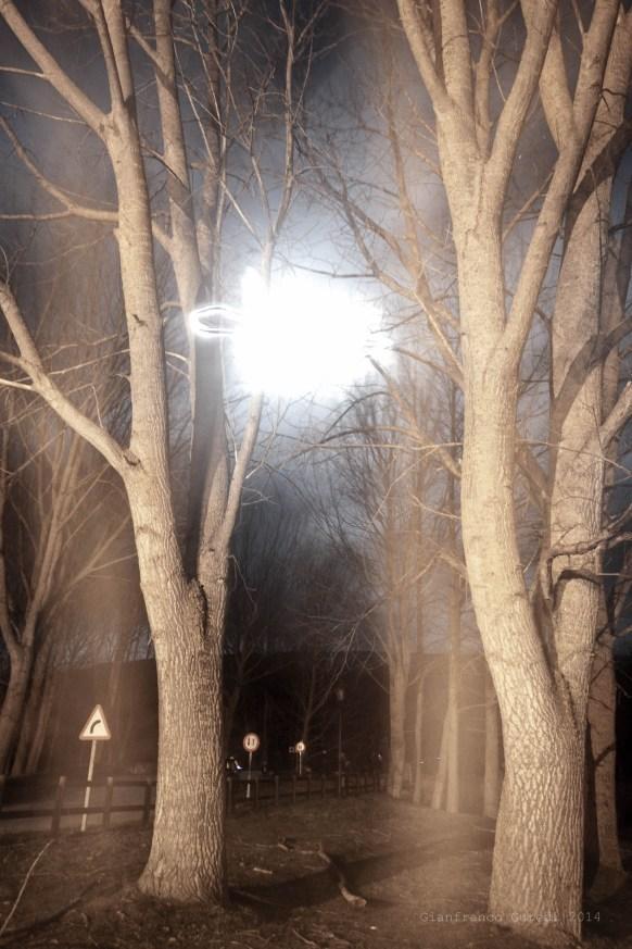 Árboles a la luz de la luna, con señales de fondo