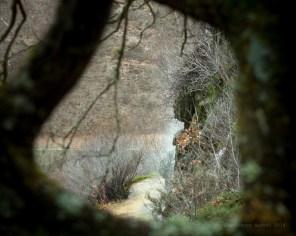 La cascada al fondo en el marco de las ramas de un árbol