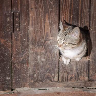 En el agujero de la puerta, buscando mi ruido.