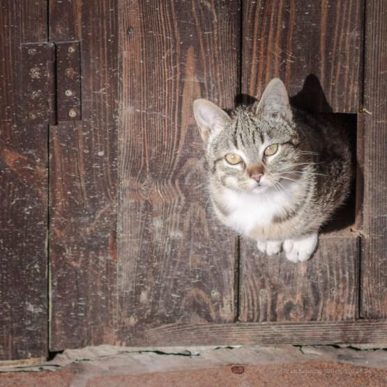 Desde el mismo agujero de la puerta, pero habiéndome encontrado, con una mirada aviesa.