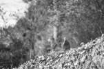 La paloma también me pilló. Me encanta el bokeh de las hojas de atrás.