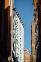 Estuve largo rato para pillas la paloma entre los edificios, pero no.