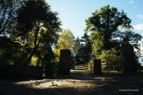 Entrada al bosque de secuoias