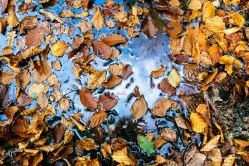 Así son las pozas de otoño