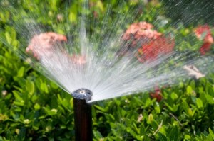 close-up residential sprinkler