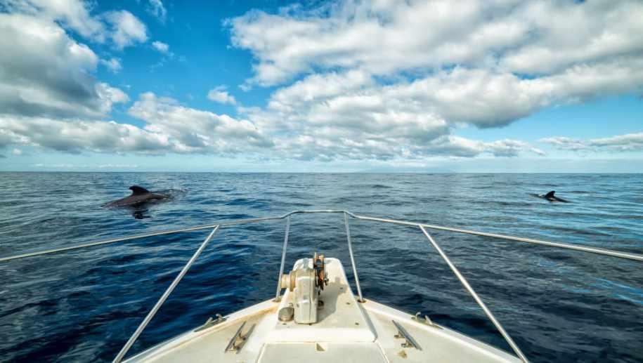 cetacean tenerife