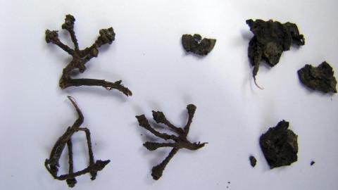 Druestengler: Det har også blitt funnet synlige rester etter druer på stedet. Foto: Scanpix