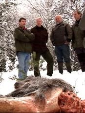 Fem ordførere i Østfold mener ulvegrensa er nådd (Foto: Kathrine Brønn/NRK)