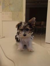 Hund som ble beslaglagt av Mattilsynet (Foto: Mattilsynet)