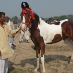 Travel The World In Horse Breeds Indulge In India In The Saddle