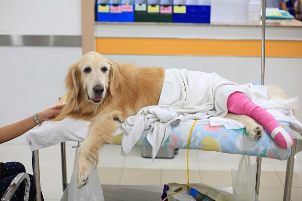 Legal Responses When a Pet Is Injured