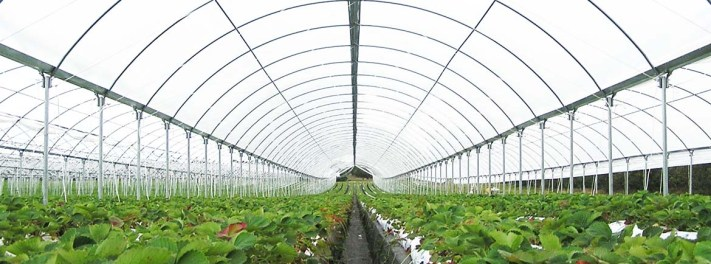 Image result for greenhouse