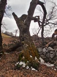 piatră și lemn