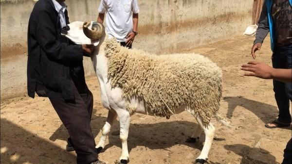 هذا تاريخ عيد الأضحى بالمغرب وعدد أيام عطلته