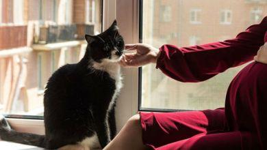 صورة تربية القطط في فترة الحمل تهدد صحة جنينك