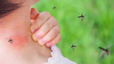 صورة طرق فعالة للتخلص من البعوض في المنزل