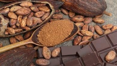 صورة يرطب ويحمي من الشيخوخة.. فوائد الكاكاو للبشرة