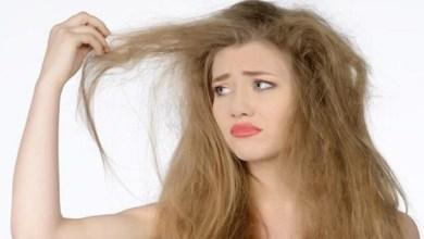 صورة منها وصفة الزبدة.. وصفات طبيعية للتخلص من جفاف الشعر