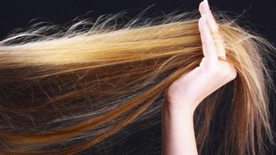 صورة ما هي أفضل الزيوت الطبيعية لعلاج تكسر الشعر؟