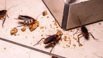 صورة أشياء في منزلك تجذب الحشرات.. تعرفي عليها